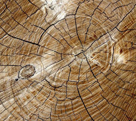 Click to get the codes for this image. Tree Rings Background 1800x1600, Wood, Colors  Brown Background, wallpaper or texture for Blogger, Wordpress, or any phone, desktop or blog.