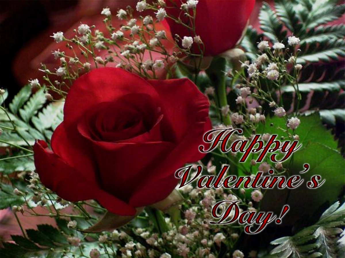 Click to get the codes for this image. Valentines Day Red Rose With Babys Breath, Holidays  Valentines Day Background, wallpaper or texture for Blogger, Wordpress, or any phone, desktop or blog.