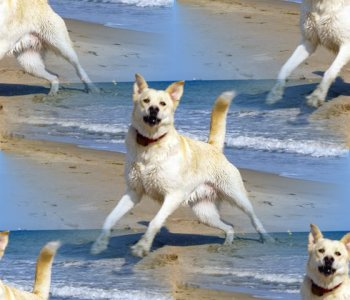 Click to get the codes for this image. White Dog On The Beach, Animals  Dogs Background, wallpaper or texture for any blog, web page, phone or desktop