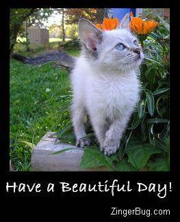Another BeautifulDay image: (have_a_beautiful_day_siamese_kitten_photo) for MySpace from ZingerBug