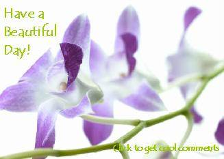 Another BeautifulDay image: (purpleflowers) for MySpace from ZingerBug