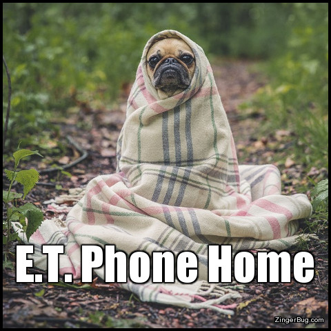 Click to get the codes for this image. This cute meme features a photograph of a small dog - a pug I think, wrapped up in a blanket so that it resembles the character E.T. from the famous movie. The caption reads: E.T. Phone Home