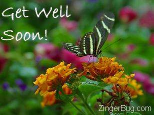Click to get the codes for this image. Get well butterfly photo, Get Well Soon, Flowers Free Image, Glitter Graphic, Greeting or Meme for Facebook, Twitter or any blog.