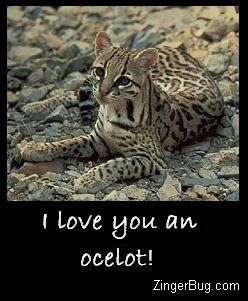 Click to get the codes for this image. Funny play on words. Photo of an ocelot, comment reads I Love you an ocelot! (an aweful lot)