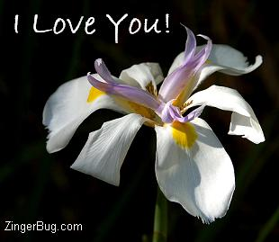 Click to get the codes for this image. I Love You Orchid, Love and Romance, Flowers, I Love You Free Image, Glitter Graphic, Greeting or Meme for Facebook, Twitter or any blog.