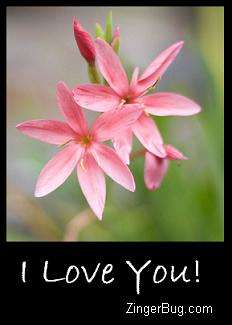 Click to get the codes for this image. I Love You Pink Flowers, Love and Romance, Flowers, I Love You Free Image, Glitter Graphic, Greeting or Meme for Facebook, Twitter or any blog.