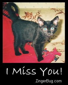 Click to get the codes for this image. I Miss You Black Kitten, Animals  Cats, I Miss You Free Image, Glitter Graphic, Greeting or Meme for Facebook, Twitter or any forum or blog.