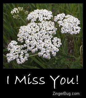 Click to get the codes for this image. I Miss You White Flowers, I Miss You, Flowers Free Image, Glitter Graphic, Greeting or Meme for Facebook, Twitter or any blog.