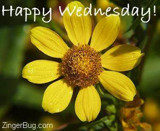 Click to get the codes for this image. Happy Wednesday yellow flower photo, Happy Wednesday, Flowers Free Image, Glitter Graphic, Greeting or Meme for Facebook, Twitter or any forum or blog.