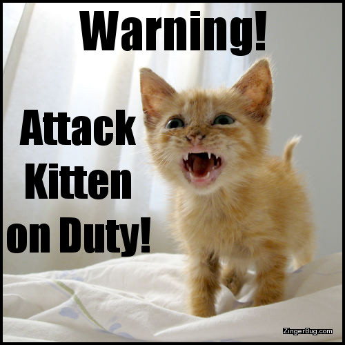 Click to get the codes for this image. This funny meme features a photo of an orange kitten who appears to be barking or growling. The caption reads: Warning! Attack kitten on duty!