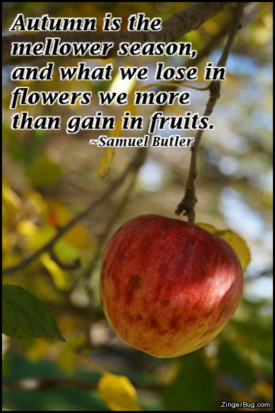 Click to get the codes for this image. This comment features a photograph of an apple hanging from a tree in fall. The quote is from Samuel Butler and reads: Autumn is the mellower season, and what we lose in flowers we more than gain in fruits.