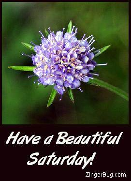 Click to get the codes for this image. Have a Beautiful Saturday Purple Flower, Happy Saturday, Flowers Free Image, Glitter Graphic, Greeting or Meme for Facebook, Twitter or any forum or blog.
