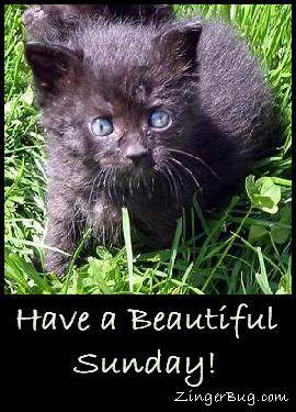 Click to get the codes for this image. Have a Beautiful Sunday Kitten, Animals  Cats, Happy Sunday Free Image, Glitter Graphic, Greeting or Meme for Facebook, Twitter or any forum or blog.