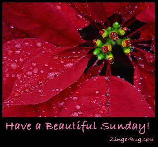 Click to get the codes for this image. Have a Beautiful Sunday Red Flower, Happy Sunday, Flowers Free Image, Glitter Graphic, Greeting or Meme for Facebook, Twitter or any forum or blog.