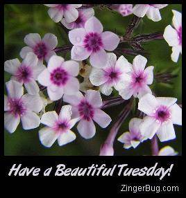 Click to get the codes for this image. Have a Beautiful Tuesday Lavender Flowers, Happy Tuesday, Flowers Free Image, Glitter Graphic, Greeting or Meme for Facebook, Twitter or any forum or blog.