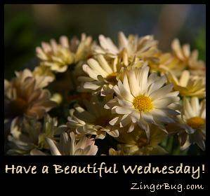 Click to get the codes for this image. Have a Beautiful Wednesday Daisies, Happy Wednesday, Flowers Free Image, Glitter Graphic, Greeting or Meme for Facebook, Twitter or any forum or blog.