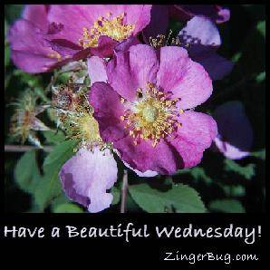 have a beautiful wednesday graphic