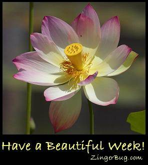 Click to get the codes for this image. Have a Beautiful Week Flower Closeup, Have A Great Week, Flowers Free Image, Glitter Graphic, Greeting or Meme for Facebook, Twitter or any blog.