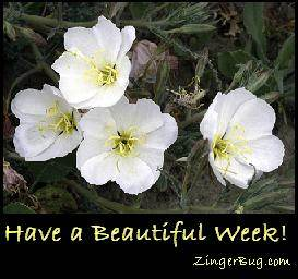 Click to get the codes for this image. Have a Beautiful Week White Flowers, Have A Great Week, Flowers Free Image, Glitter Graphic, Greeting or Meme for Facebook, Twitter or any blog.