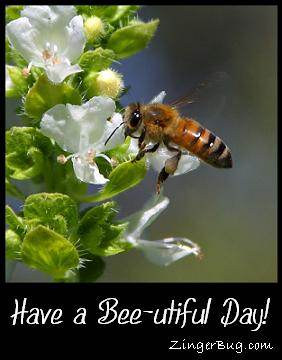 Click to get the codes for this image. Closeup photo of a bee on a flower. Comment reads: Have a Bee-utiful Day!