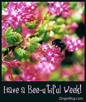 Click to get the codes for this image. Closeup photo of a bee on a flower. Comment reads: Have a Bee-utiful week!