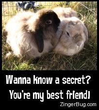 Click to get the codes for this image. Cute photo of a bunny whispering in another bunny's ear. Comment reads: Wanna know a secret? You're my best friend!