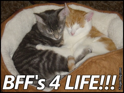 Click to get the codes for this image. Bffs 4 Life Hugging Kittens, Animals  Cats, Friendship Free Image, Glitter Graphic, Greeting or Meme for Facebook, Twitter or any forum or blog.