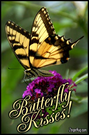 Click to get the codes for this image. Butterfly Kisses Monarch Butterfly On Flower, Animals  Butterflies  Bugs, Butterfly Kisses Free Image, Glitter Graphic, Greeting or Meme for Facebook, Twitter or any forum or blog.