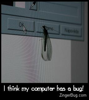 Click to get the codes for this image. Photo of a bug that has landed on a computer screen. The comment reads: I think my computer has a bug!