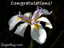 Click to get the codes for this image. Congratulations Orchid Photo, Congratulations, Flowers Free Image, Glitter Graphic, Greeting or Meme for Facebook, Twitter or any blog.