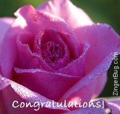 Click to get the codes for this image. Congratulations Rose Photo, Congratulations, Flowers Free Image, Glitter Graphic, Greeting or Meme for Facebook, Twitter or any blog.