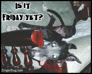 Click to get the codes for this image. This funny photo shows a crazy doberman lying on a couch with its tongue hanging out. The comment reads: Is it Friday yet!