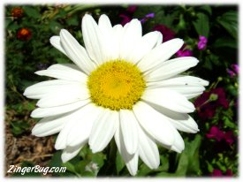 Click to get the codes for this image. Daisy Photo, Flowers, Flowers Free Image, Glitter Graphic, Greeting or Meme for Facebook, Twitter or any blog.