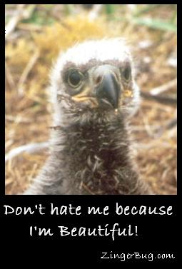 Click to get the codes for this image. Photo of a really ugly eagle chick with the comment: Don't hate me because I'm beautiful!