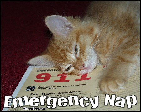 Click to get the codes for this image. Emergency Nap Kitten, Animals  Cats, Funny Stuff  Jokes Free Image, Glitter Graphic, Greeting or Meme for Facebook, Twitter or any forum or blog.