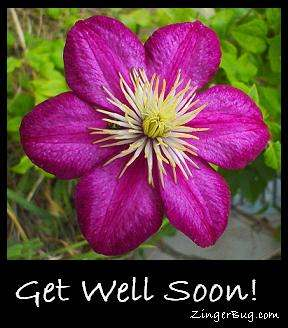 Click to get the codes for this image. Get Well Soon Purple Flower, Get Well Soon, Flowers Free Image, Glitter Graphic, Greeting or Meme for Facebook, Twitter or any blog.