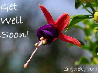 Click to get the codes for this image. Get well flower photo, Get Well Soon, Flowers Free Image, Glitter Graphic, Greeting or Meme for Facebook, Twitter or any blog.