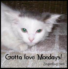 Click to get the codes for this image. Gotta Love Mondays Kitten, Animals  Cats, Happy Monday Free Image, Glitter Graphic, Greeting or Meme for Facebook, Twitter or any forum or blog.