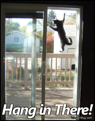 Click to get the codes for this image. Hang In There Cat Climbing Screen Door, Animals  Cats, Funny Stuff  Jokes, Encouragement  Cheer Up Free Image, Glitter Graphic, Greeting or Meme for Facebook, Twitter or any forum or blog.