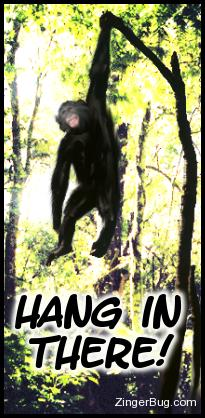 Click to get the codes for this image. Funny photo of a chimp hanging from a branch. Comment reads: Hang in There!