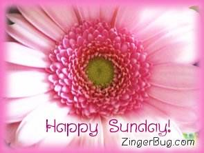 Click to get the codes for this image. Happy Sunday Pink Flower, Happy Sunday, Flowers Free Image, Glitter Graphic, Greeting or Meme for Facebook, Twitter or any forum or blog.
