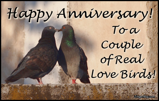 Click to get the codes for this image. This cute greeting features a photograph of a pair of pigeons who appear to be kissing. The comment reads Happy Anniversary to a couple of real love birds!
