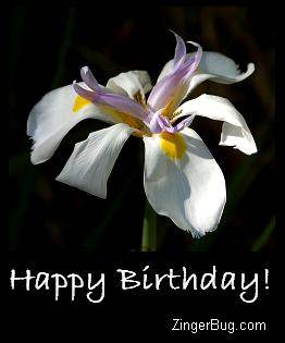 Click to get the codes for this image. Happy Birthday White Flower, Birthday Flowers, Flowers, Happy Birthday Free Image, Glitter Graphic, Greeting or Meme for Facebook, Twitter or any forum or blog.
