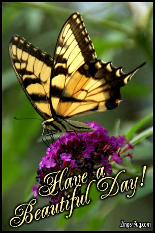 Click to get the codes for this image. Have A Beautiful Day Butterfly Photo, Animals  Butterflies  Bugs, Have a Great Day Free Image, Glitter Graphic, Greeting or Meme for Facebook, Twitter or any forum or blog.