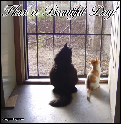 Click to get the codes for this image. Have A Beautiful Day Cats In Doorway, Animals  Cats, Have a Great Day Free Image, Glitter Graphic, Greeting or Meme for Facebook, Twitter or any forum or blog.