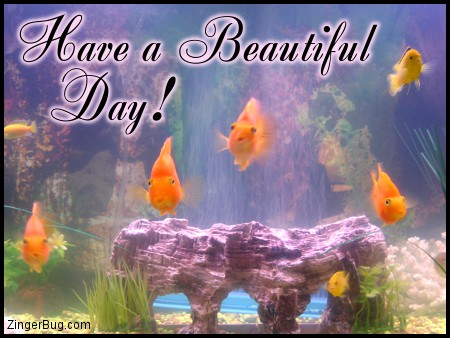 Click to get the codes for this image. Have A Beautiful Day Goldfish, Animals  Fish Dolphins Whales, Have a Great Day Free Image, Glitter Graphic, Greeting or Meme for Facebook, Twitter or any forum or blog.