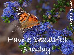 Click to get the codes for this image. Have A Beautiful Sunday Butterfly On Flowers Photograph, Happy Sunday, Flowers, Animals  Butterflies  Bugs Free Image, Glitter Graphic, Greeting or Meme for Facebook, Twitter or any forum or blog.