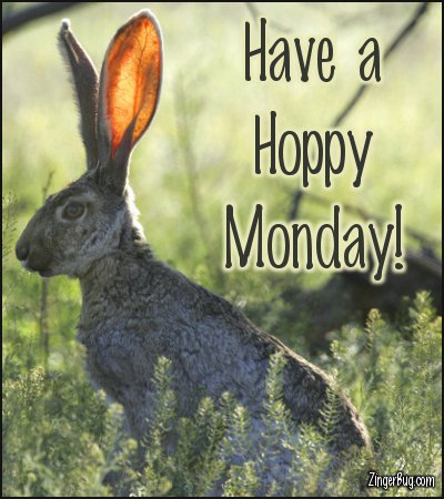 Click to get the codes for this image. Have A Hoppy Monday Jack Rabbit Photo, Animals  Bunnies  Rabbits, Happy Monday Free Image, Glitter Graphic, Greeting or Meme for Facebook, Twitter or any forum or blog.