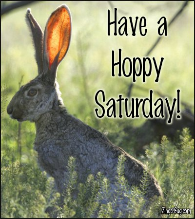 Click to get the codes for this image. Have A Hoppy Saturday Jack Rabbit Photo, Animals  Bunnies  Rabbits, Happy Saturday Free Image, Glitter Graphic, Greeting or Meme for Facebook, Twitter or any forum or blog.