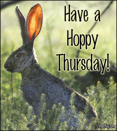 Click to get the codes for this image. Have A Hoppy Thursday Jack Rabbit Photo, Animals  Bunnies  Rabbits, Happy Thursday Free Image, Glitter Graphic, Greeting or Meme for Facebook, Twitter or any forum or blog.